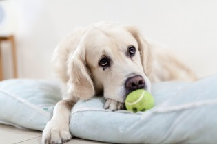 Do tenants with pets make the best tenant?